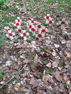 Poppies planted by members of the families
